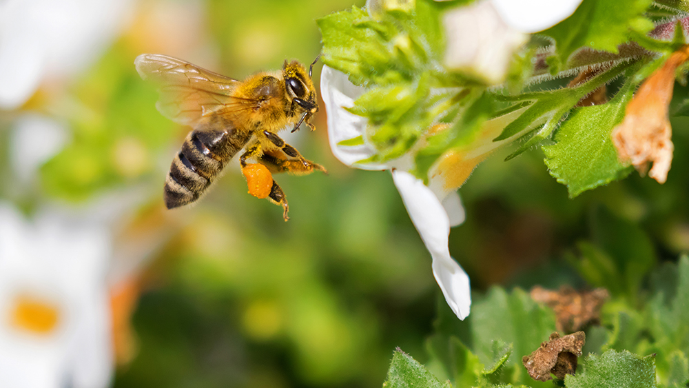 Bees Are Actually Really, Really Smart