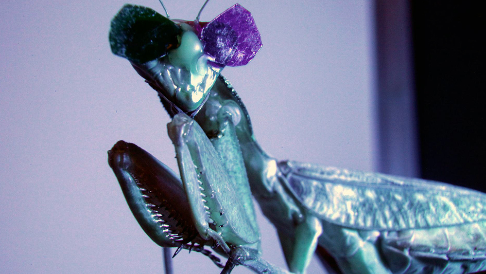 3-D Praying Mantis Vision Confounds Evolution