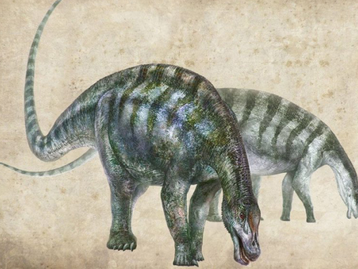 Diplodocoid Dinosaurs Found in Unexpected Place