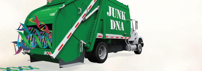 Major Evolutionary Blunders: Evolutionists Strike Out with Imaginary Junk DNA, Part 2