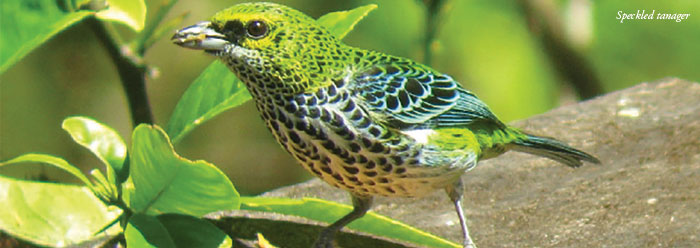 Tree-Snacking Tanagers Undermine Darwin