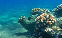 RNA Editing in Corals Stupefies Evolution
