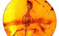 Amber-Encased Lizards Showcase Recent Creation