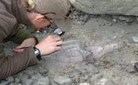 Dinosaur Thighbone Found in Marine Rock