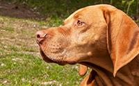 Man-Made Sniffer Versus Dog