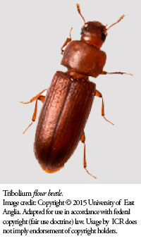 Beetle Reproduction The Institute for Crea...