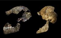 Homo naledi: Dating the Strange Ape