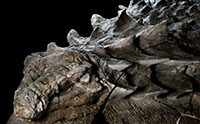 Secrets from the World's Best-Preserved Nodosaur