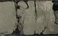 Fossil DNA in Deep Seafloor Mud