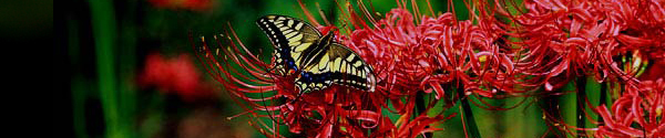Click here to see  the web version of this Days of Praise