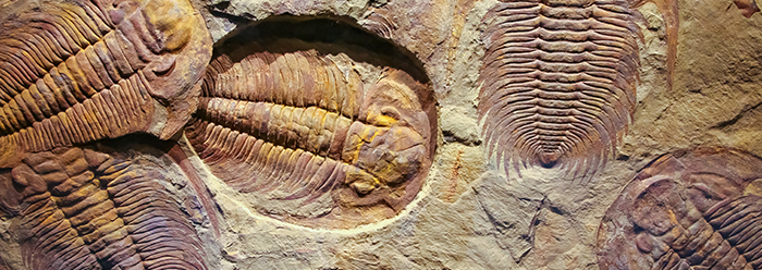 cambrian period research papers Without the time, the formula cannot work, and yet cambrian fossils are a  2, 3  the molecular clock estimates in this science study were.
