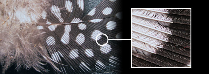 Fossil Feathers Convey Color