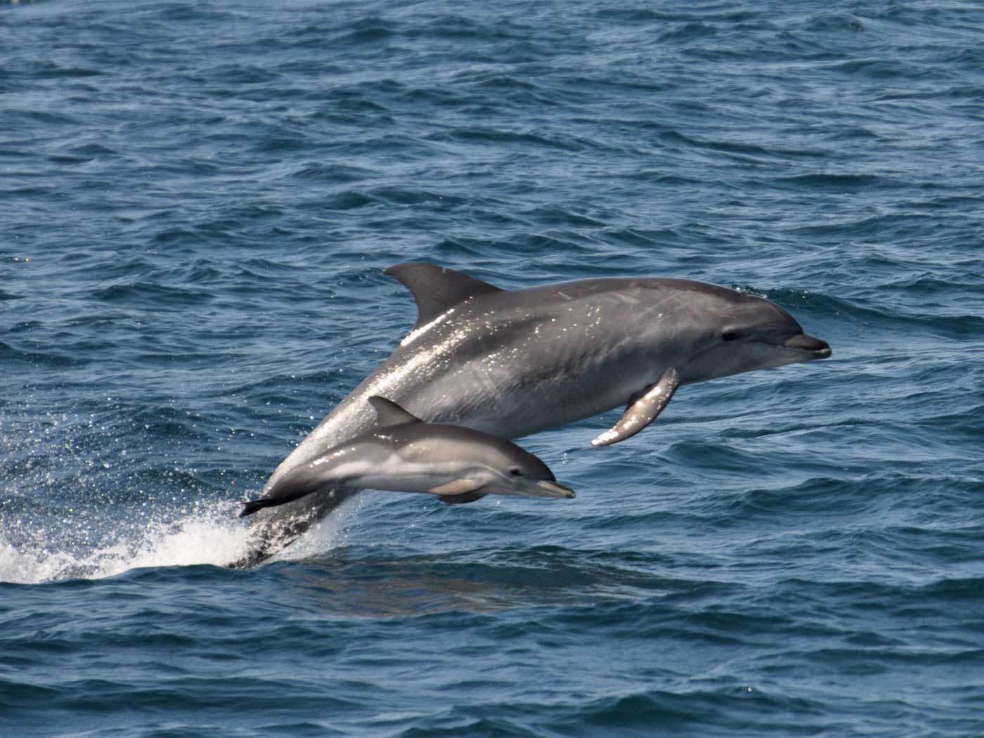 Dolphins Learn Tricks from Peers to Catch Fish