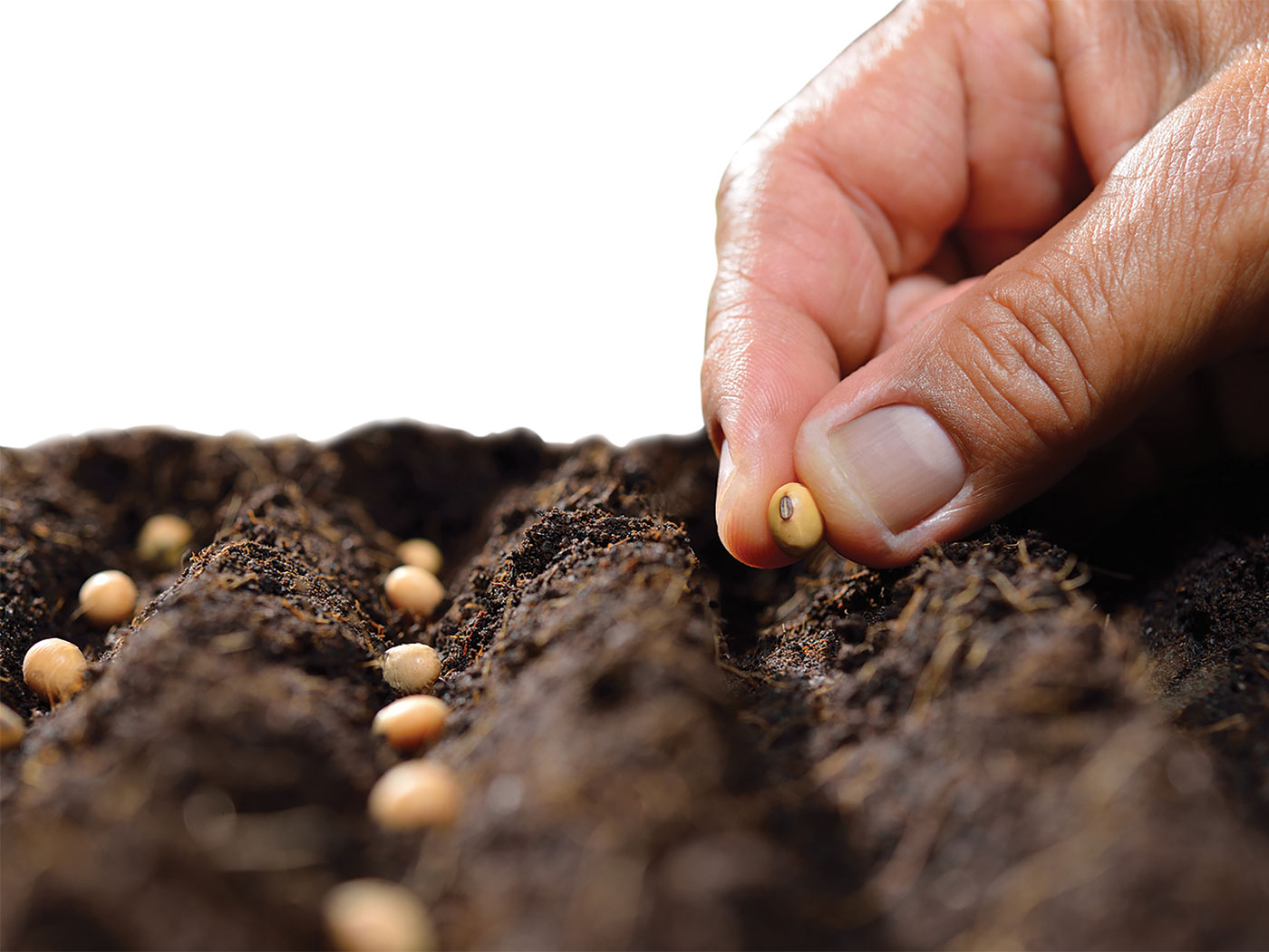 Sowing Seeds The Institute For Creation Research