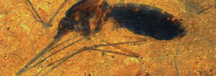 The OCR carbon Dating procedure in Australia: New Dates From Wilinyjibari Rockshelter, southeast Kimberley, Western Australia.