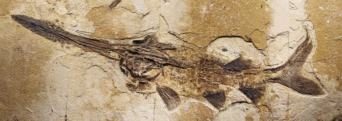 Fossilized Biomaterials Must Be Young