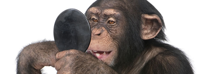 Evaluating the Human-Chimp DNA Myth--New Research Data