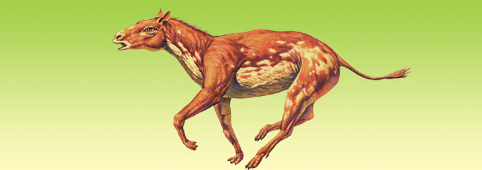 Hyracotherium illustration © Joe Tucciarone. Used by permission.