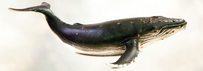 Major Evolutionary Blunders Are Whales And Evolution
