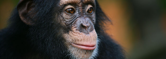 If we evolved from apes, is there any point in our lives?