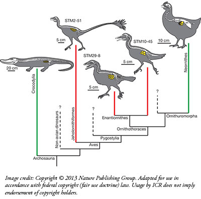 """the arguments over the evolution of birds Proof of evolution: birds grew larger beaks in  """"i had lots of arguments with my students about  like how they will change over the next 500 years not the."""