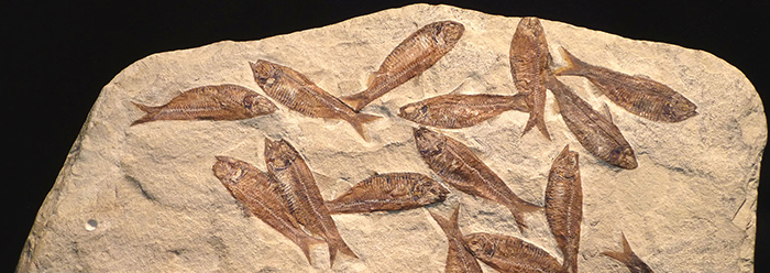 Carbon dating undercuts evolution long ages