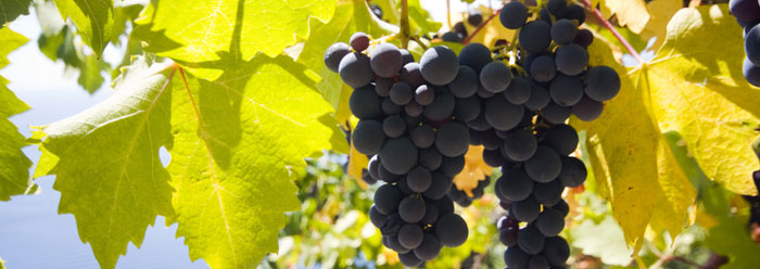 Ancient Winery Found Near Mount Ararat | The Institute for
