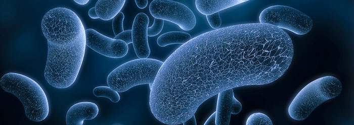 Bacteria Study Shoots Down 'Simple Cell' Assumptions | The ...