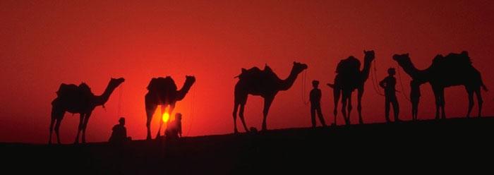 Genesis Camels Biblical Error The Institute For