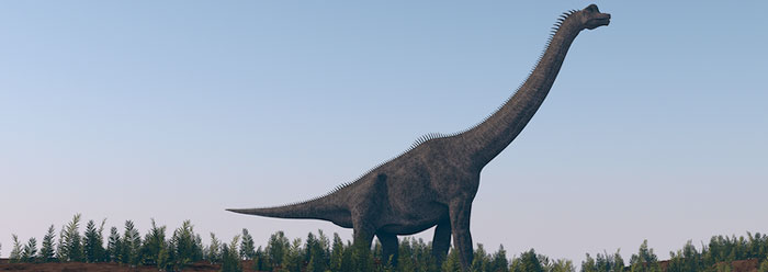 Amazing Design Structures In Long Necked Dinosaurs   The Institute For  Creation Research