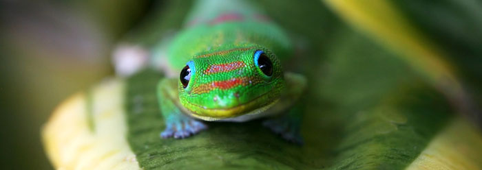 Gecko Eyes Make Great Night Vision Cameras The Institute